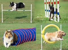 Dogs doing Agility